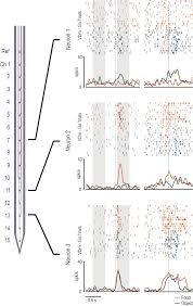 multimodal encoding of goal directed actions in monkey ventral