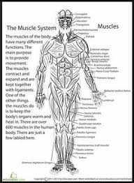 The Human Anatomy Muscles Great Website With Free Biology Diagrams To Print And Or Color