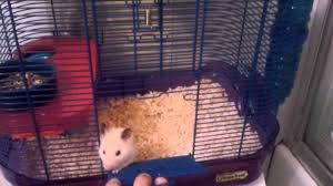 Hamster Cages Cheap Syrian Hamster Cage Size Youtube