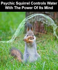 Psychic Meme - psychic squirrel controls water with the power of its mind meme guy