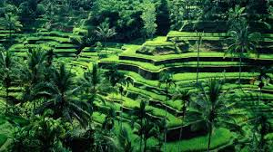 bali indonesia landscape background wallpaper photo shared by jeno