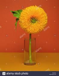 vase sunflower high sun gold glass vase plants ornament