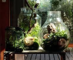 terrarium garden vitaegenus