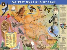 Texas wildlife images Far west texas wildlife trail mountain trail region jpg