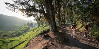 share the damn road cycling jersey bicycling pinterest road roadtripping malaysia cyclingtips