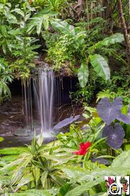 tropical garden ideas 543 best tropical gardening images on pinterest landscaping