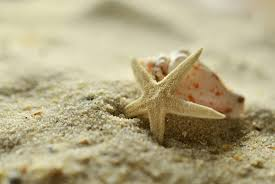 free images travel holiday starfish shell invertebrate