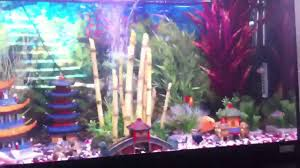 japanese aquarium tropical aquarium japan theme youtube