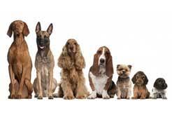 australian shepherd dog names top 100 dog u0026 puppy names american kennel club