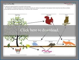 food chain worksheets for high lovetoknow