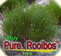 Teh Afrika africa grass tea teh rumput afrika beranda