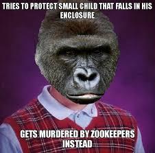 Gorilla Meme - bad luck cincinnati gorilla meme guy