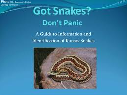 Snake In The Backyard by Know Your Kansas Snakes