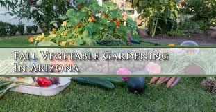 fall vegetable gardening in arizona mesa queen creek gilbert
