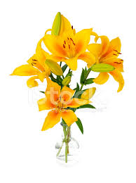 Yellow Lilies Yellow Lilies In Glass Vase Stock Photos Freeimages Com