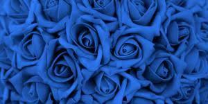 imagenes con flores azules dia de la maestra cuál es el significado de las rosas blancas 4 pasos