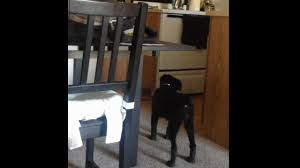 dog barks when we leave dog sees a ghost real caught on tape youtube