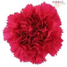 pink flower pink flowers light hot pink wedding flowers