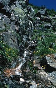 New Hampshire vegetaion images Mount washington jpg