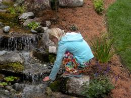 pondless waterfalls the nature scapes experience