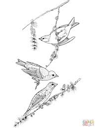finches coloring pages free coloring pages