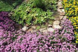 how to use river rock in plant beds home guides sf gate