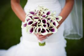 picasso calla picasso calla lilies erin volante floral