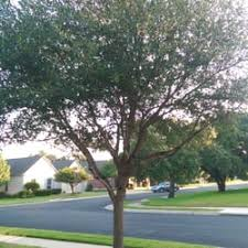 ls that look like trees austin tree surgeons 22 photos 22 reviews tree services 150