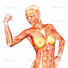 Female Muscles Anatomy Human Anatomy Chart Page 73 Of 202 Pictures Of Human Anatomy Body