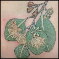 australian native plants brisbane australian native plant botanical tattoos