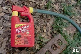 fleas in backyard outdoor goods