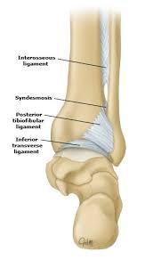 Posterior Inferior Tibiofibular Ligament Posterior Tibiofibular Ligament And Inferior Transverse Ligament