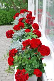 best 25 window boxes ideas on pinterest outdoor flower boxes