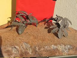 antique a1412 2 vintage japanese bronze ornaments leaves