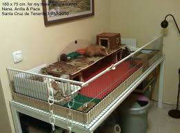 Cages For Guinea Pigs Hello Everybody New From Canary Islands