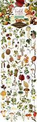 Bouquet De Bonbons Aquarelle by 47 Best Floral Designs And Illustrations Images On Pinterest