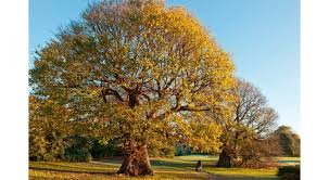 five terrific tree facts for arbor day dk find out
