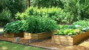 Gardening Ideas For Children Kid Vegetable Garden Alexstand Club