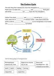 carbon cycle by sian jones teaching resources tes