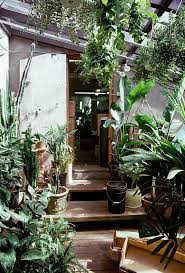 Location Guirlande Lumineuse by 2101 Best Verde Images On Pinterest Plants Houseplants And