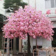sale japanese cherry blossoms seeds courtyard garden