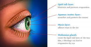 Eye Ducts Anatomy Dry Eye Treatment Lipiflow Restasis Salt Lake City Utah Ut