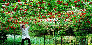 aliexpress buy 200 seeds high quality vegetable seed tree