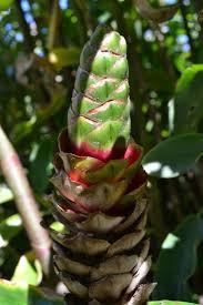 australian native plants for sale 34 best landscaping images on pinterest florida gardening
