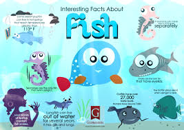 interesting facts about fish visual ly