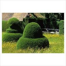 Yew Topiary - 29 best yew topiary images on pinterest topiaries formal