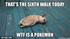 Wtf Is A Meme - this is the 6th walk today wtf is a pokemon dog humor