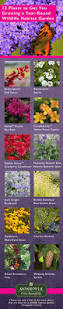 native plants and wildlife gardens best 25 butterfly plants ideas on pinterest butterfly garden