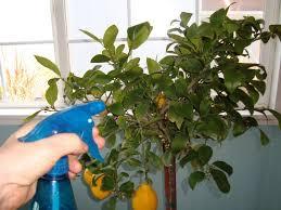 160 best i u0027m broke apartment gardening d i y images on