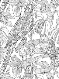 118 best colouring birds images on pinterest coloring books